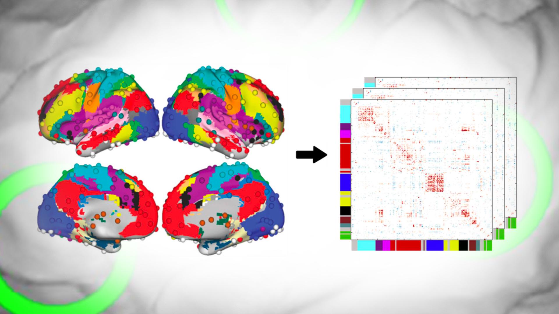 Kuvitusta aivoista ja tunteista
