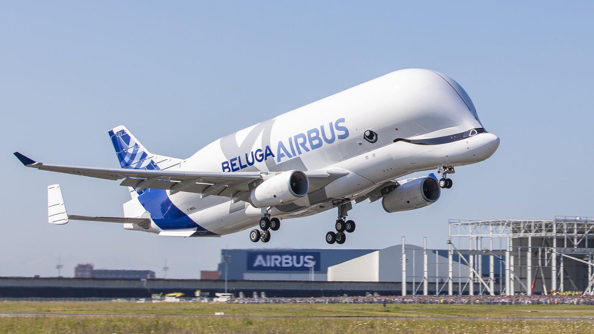 Beluga XL nousee lentoon