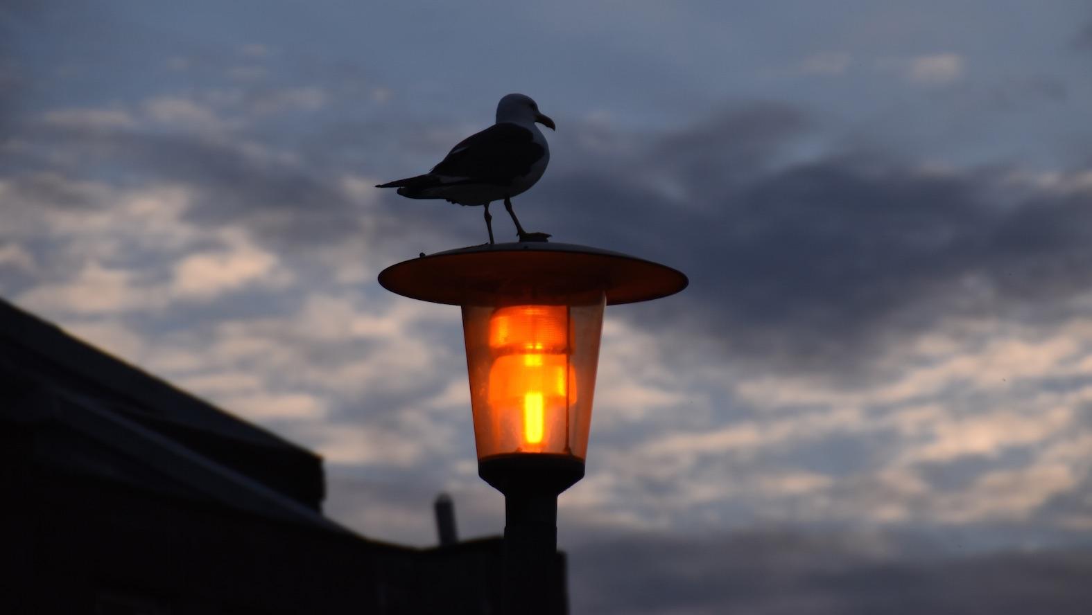 Lokki lampun päällä