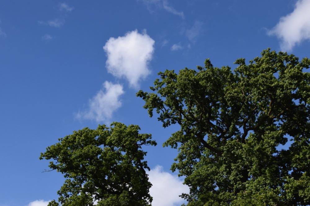 Sininen taivas